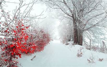 Snow Ice Winter Forest Tree Earth Wallpaperup