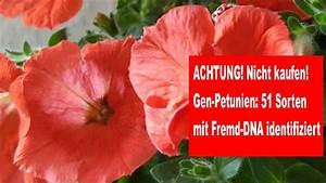 Petunien Samen Kaufen : vorsicht nicht kaufen gen petunien 51 sorten mit fremd ~ Michelbontemps.com Haus und Dekorationen