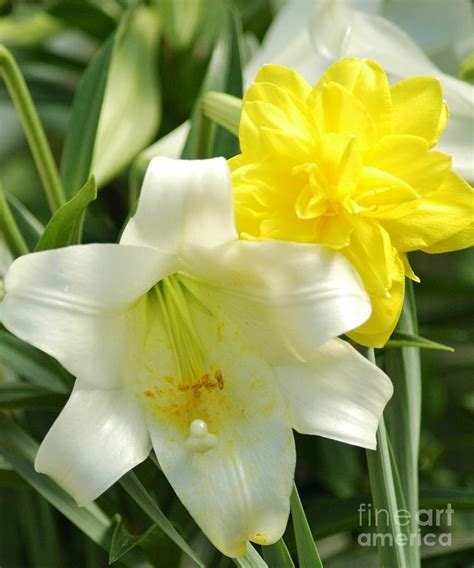 easter flowers photograph by struckle
