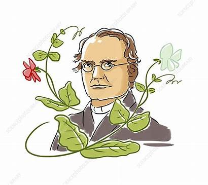Mendel Gregor Botanist Poster Genetics Ritsch Harald