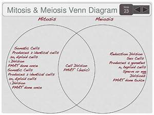 32 Venn Diagram For Mitosis And Meiosis