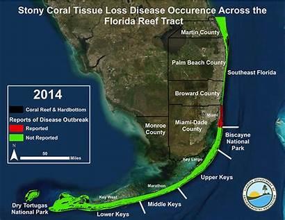 Coral Disease Florida Reef Keys Tract Outbreak