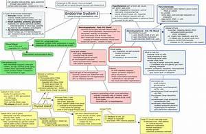 Endocrine System I