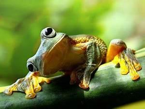 Feng Shui Frosch : krafttier frosch viversum ~ Sanjose-hotels-ca.com Haus und Dekorationen