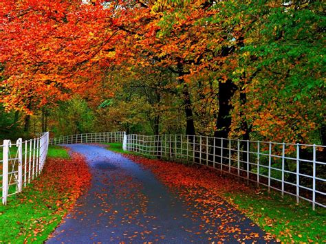 Forests Parks Trees Leaves Roads Fences Natural Beauty Of