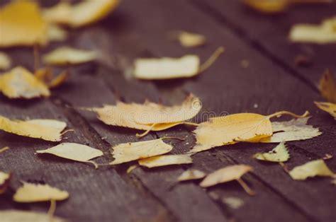autumn dry leaf stock image image  november background