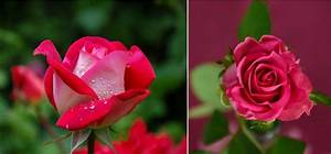 Top 10 Most Beautiful Flowers In The World 2017 – 2018 ...