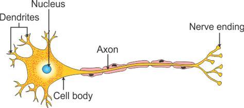 Download scientific diagram   tendon structure and composition. Ch-7 Control and Coordination   Edu Spot
