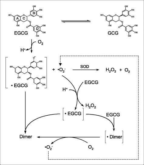 mechanism  action  epigallocatechin  gallate