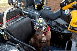 Mourning Father Sets Off with His Dog on 10-Year Moto ...
