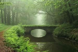 Bridge, Forest, River, Moss, Ferns, Green, Wallpapers, Hd, Desktop, And, Mobile, Backgrounds