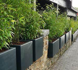 Bac Rectangulaire Pour Bambou : bambous en pots et bacs int r ts et esp ces adapt es ~ Nature-et-papiers.com Idées de Décoration