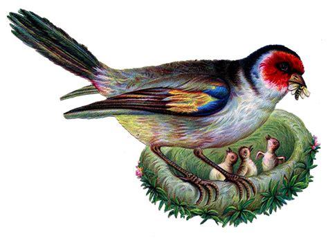 vintage clip art image wonderful bird  nest