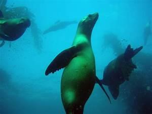 5 Marine Animals Of The Kelp Forest