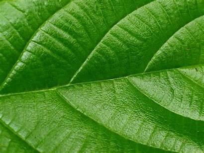 Leaf Wallpapers Leaves Desktop Wallpapersafari Backgrounds Fern
