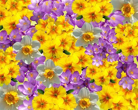 Fotos gratis : naturaleza pétalo florecer primavera
