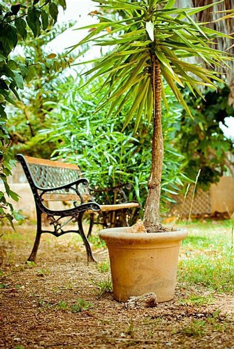 mediterranean trees mediterranean garden this is an achievable goal in germany interior design ideas avso org