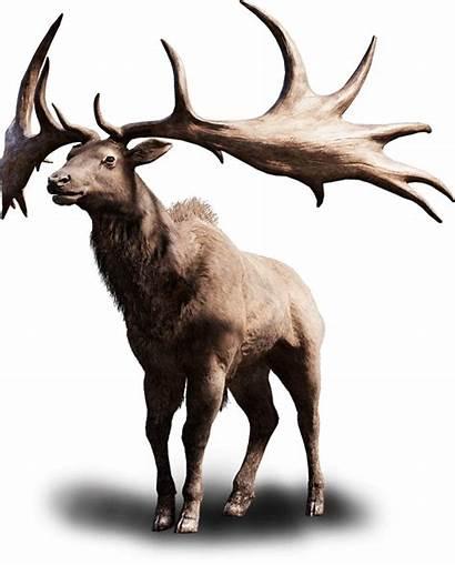 Elk Cry Far Tall Primal Moose Deer