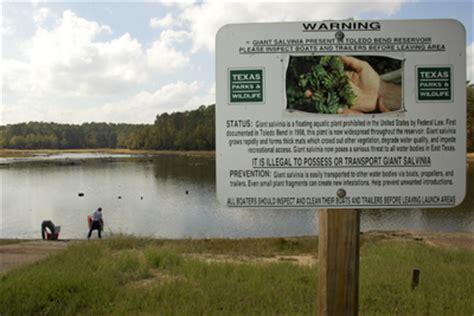 invasive aquatic species texas parks wildlife department