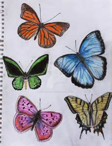 Butterfly Sketches Drawings