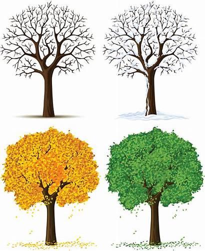 Seasons Trees Four Clipart Clip Tree Cliparts