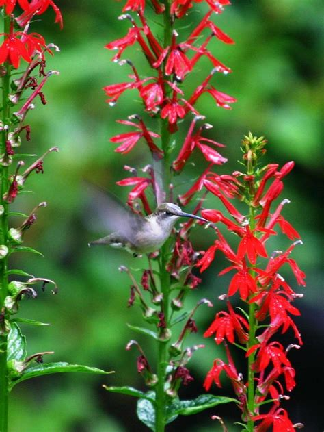 139 Best Gardening With Native Plants Images On Pinterest