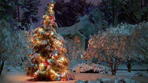 1920x1080 outdoor christmas tree desktop pc and mac