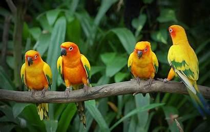 Birds Wallpapers Backgrounds Desktop Keywords