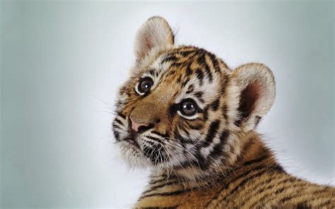Free Baby Animal Wallpaper - baby animal wallpapers wallpaper cave