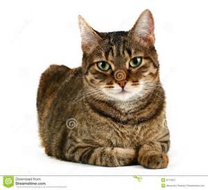 picture of cats domestic cat royalty free stock photography image 8174027