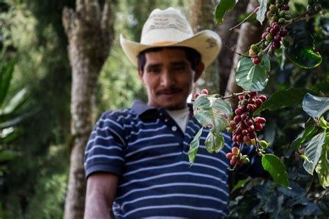 Many Fairtrade Coffee Farmers Don't Earn Enough To Live On Delonghi Coffee Machine Clogged Currys Italian Zacatecas Johannesburg Coop Turkish Austin Advantages And Disadvantages Helpline