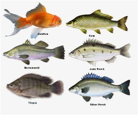prepper folks types  fish  aquaponics