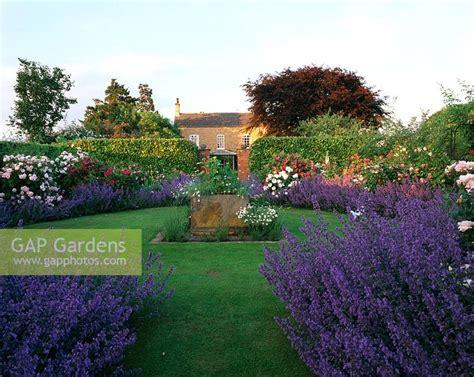 Gap Gardens  Formal Rose Garden With Nepeta 'six Hills