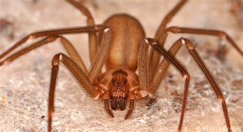 Update Spiders Still Dont Bite Arthropod Ecology