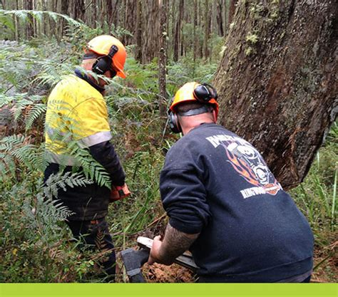 Qualifications & Courses  Arbortrim Training