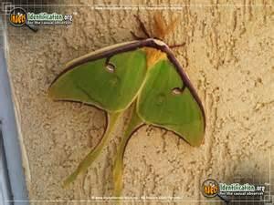 Butterfly Moth Identification