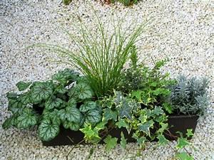 Balkonkästen Winterhart Bepflanzen : bepflanzter balkonkasten 60 cm wintergr n pflanzen ~ Lizthompson.info Haus und Dekorationen