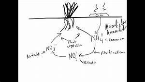 A Simplified Nitrogen Cycle