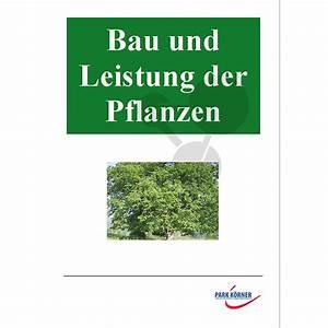 Bau Der Pflanze : bau und leistung der pflanzen conatex lehrmittel ~ Lizthompson.info Haus und Dekorationen