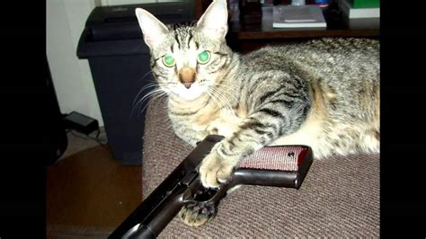 cats  guns youtube