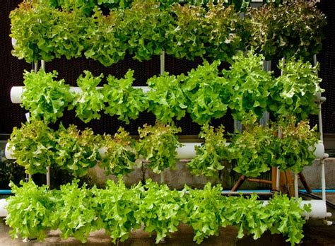 Can You Grow In A Vertical Garden by 27 Unique Vertical Gardening Ideas With Images Planted Well