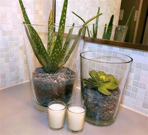 Pot Plants For The Bathroom by 17 Best Ideas About Bathroom Plants On Indoor