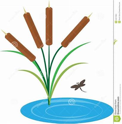 Pond Cattails Cattail Clipart Clip Dragonfly Illustration