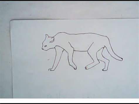 How To Draw An African Wildcat (easy, Simple Art) Youtube