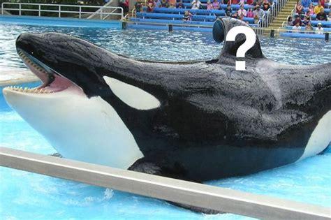Killer Whales Seaworld