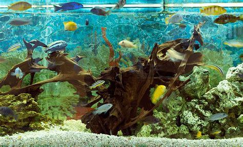 wie warm muss ein aquarium sein wie richte ich mein aquarium am besten ein qualipet