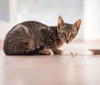 Hanya 3 bahan, resep minuman sehat lima ribuan untuk otot besar buat mencukupi kebutuhan otot ga perlu mahal Makanan serta Minuman yang Terbaik untuk Kucing Kampung ...
