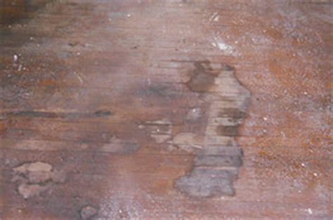 Dried Urine On Hardwood Floors by Rowhouse Rehab Rescuing Our Floors From Cat