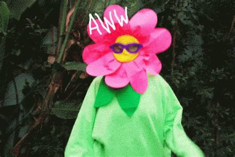 Plant Gifs  Find & Share Tenor