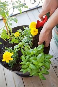Quand Planter Les Tomates Cerises : quand planter les best les fougres sont des plantes ~ Farleysfitness.com Idées de Décoration